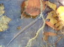 logwood blanket blauwhout deken